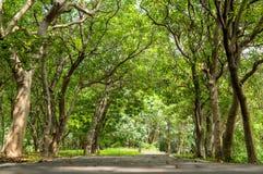 Tunnel d'arbres Images libres de droits