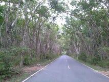 Tunnel d'arbres en caoutchouc de HadYai Thaïlande Photographie stock libre de droits