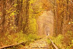 Tunnel d'automne de chute de l'amour dans Klevan Ukraine Photo stock