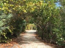 Tunnel dans la forêt tropicale Photographie stock libre de droits