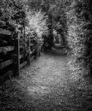 Tunnel de forêt en bois de Plessey Images stock