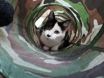 Tunnel de l'amour Images stock