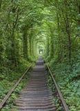 Tunnel de l'amour près de Klevan, Ukraine Photo stock