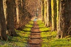 Tunnel de promenade de nature Images libres de droits