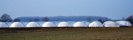 Tunnel de serre chaude de plastique de polythène sur un champ agricole Photos stock