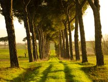 Tunnel degli alberi Fotografia Stock