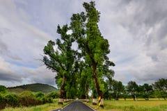 Tunnel degli alberi in strada tipica nell'Alentejo Immagini Stock