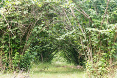 Tunnel dei rami Immagini Stock