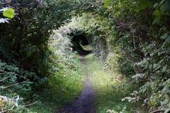 Tunnel del cespuglio Immagine Stock Libera da Diritti