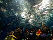 Tunnel dell'acquario di Shangnai Immagine Stock Libera da Diritti