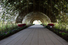 Tunnel dell'albero Immagini Stock Libere da Diritti