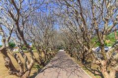 Tunnel dell'albero Immagine Stock Libera da Diritti