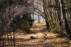 Tunnel dell'albero Fotografia Stock Libera da Diritti