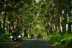 Tunnel dell'albero della strada di Maluhia Fotografie Stock