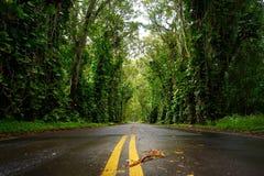 Tunnel dell'albero di eucalyptus vicino alla città di Koloa su Kauai Fotografie Stock Libere da Diritti