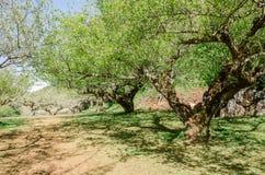 Tunnel dell'albero ed ombra dell'albero in parco Fotografie Stock Libere da Diritti