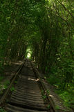Tunnel dell'amore in Klevan fotografia stock