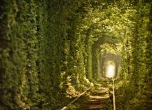 Tunnel dell'amore naturale costituito dagli alberi Fotografie Stock Libere da Diritti
