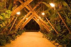 Tunnel della palma Immagini Stock Libere da Diritti