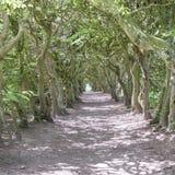 Tunnel der Bäume Lizenzfreies Stockfoto