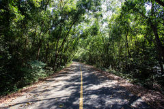 Tunnel der Bäume Stockfotos