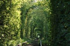 Tunnel der Liebe Lizenzfreie Stockfotos