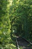 Tunnel der Liebe bildete sich durch Bäume in Ukraine Lizenzfreies Stockfoto
