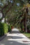 Tunnel der Palmen Stockfotografie