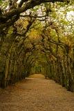 Tunnel des arbres image stock