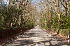 Tunnel des arbres au-dessus d'une route. Photographie stock libre de droits