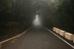 Tunnel des arbres dans la forêt foncée images stock