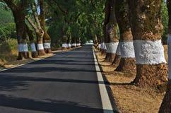 Tunnel des arbres en Castelo de Vide Images stock