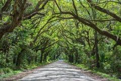 Tunnel des arbres sur la route de baie de botanique Image libre de droits