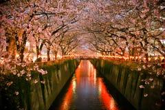 Tunnel des fleurs de cerisier (Sakura fleurissant) Japon Image stock