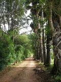 Tunnel des palmiers à sucre, Hadyai, Songkhla, Thaïlande Photographie stock