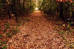 Tunnel di autunno fotografie stock libere da diritti