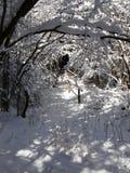 Tunnel di Snowy dei branchces dell'albero Fotografia Stock