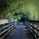 Tunnel di vita fotografia stock