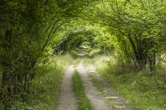 Tunnel door groene struiken stock foto's