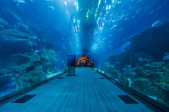 The tunnel of the dubai aquarium. In the tunnel of the Dubai Aquarium & Underwater Zoo in the largest shopping center in the world, dubai mall with 2.000 shops Royalty Free Stock Images