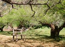 Tunnel e sedia dell'albero in un giorno caldo Immagine Stock Libera da Diritti