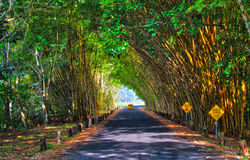 Tunnel en bambou Photographie stock