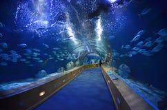 Tunnel en verre dans l'aquarium de LOceanografic Image stock