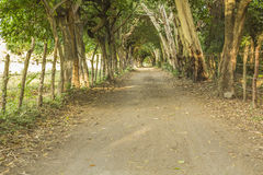 Tunnel at the end of the road,Ometepe Island Royalty Free Stock Photo