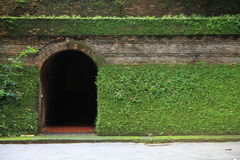 Tunnel entrance covered with fern and moss Stock Images