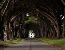 Tunnel för cypressträd royaltyfri bild