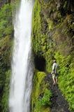 Tunnel Falls in Oregon. Eagle Creek Trail at Tunnel Falls Along Stock Photos