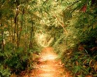 Tunnel in fantasie tropisch bos stock foto's