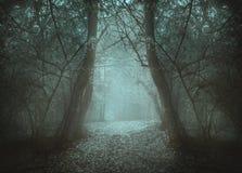 Tunnel fantasmagorique dans la forêt par la brume Images stock