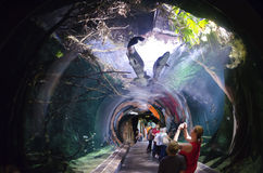tunnel fatto di vetro in un acquario Immagine Stock